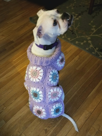 grannydogsweater